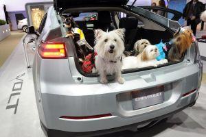 ¿Viajas con tu perro? Sigue estos consejos