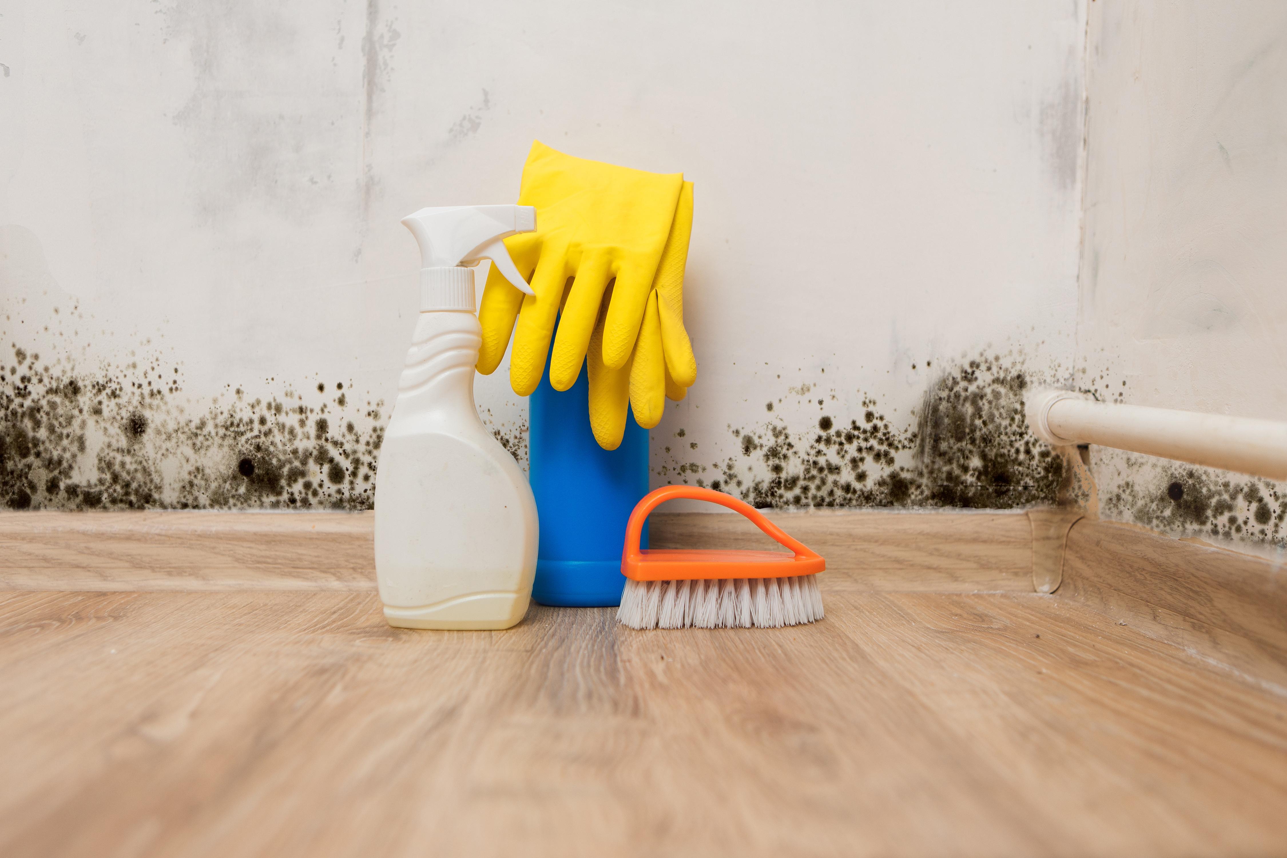 El moho más común que crece dentro o fuera del hogar es el de color negro, conocido científicamente por el nombre de cladosporium. Si su presencia no es abundante, éste se puede remover con agua con cloro y otros productos de limpieza especiales para ello.