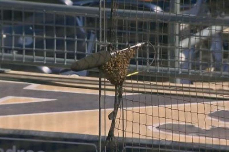 Video: Rockies y Padres suspendieron su partido por una invasión de ¡abejas!