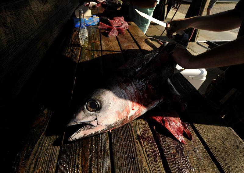 Guerra hasta el último aliento por la venta de atún mexicano en EEUU