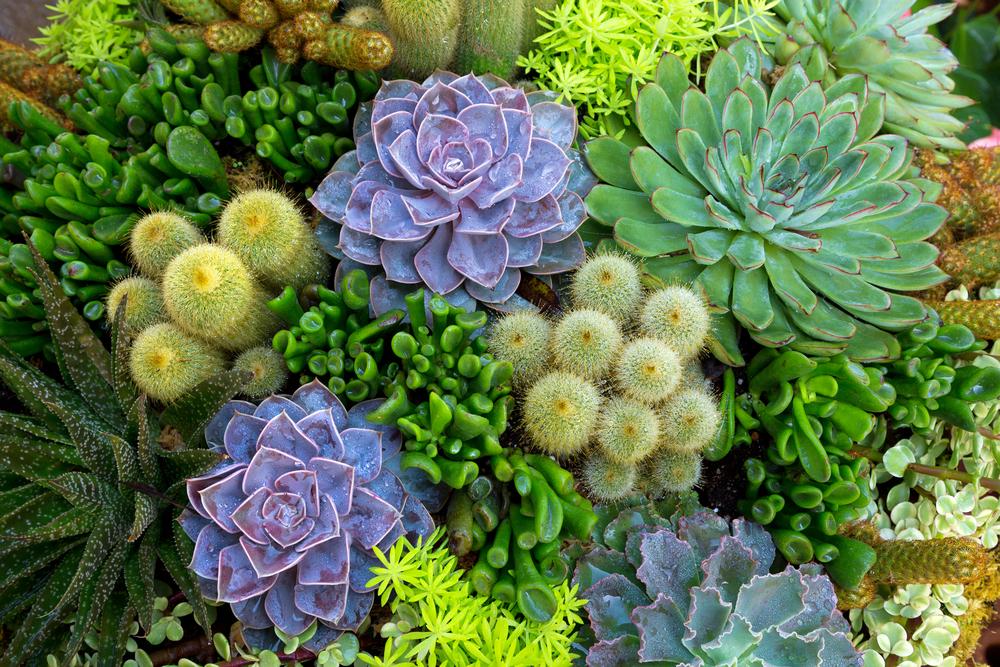 Este Día de la Tierra, planta un jardín… en casa
