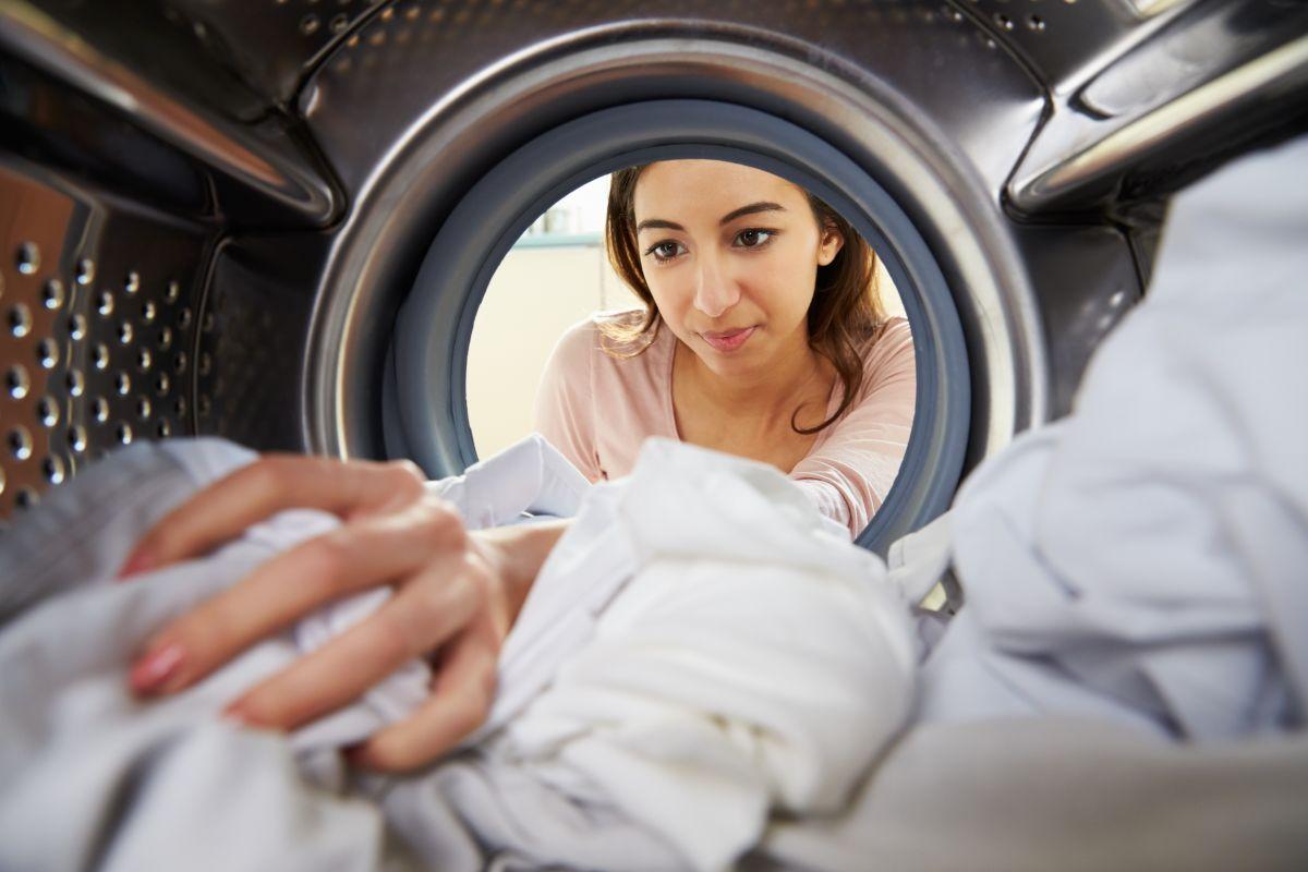¡Insólito! Inusual mascota sobrevive tras ciclo en lavadora de ropa