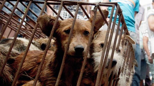 En qué países se comen perros y por qué