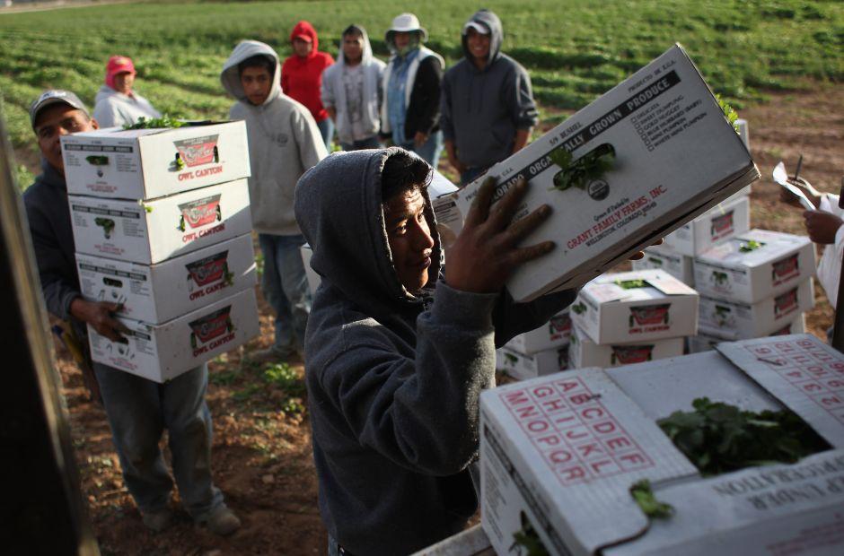 Primera redada de ICE a plantación agrícola prende las alarmas