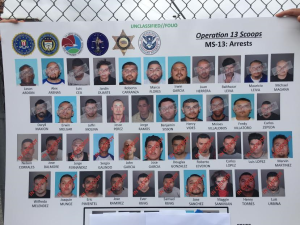 Arrestan a docenas de supuestos pandilleros de la MS-13 en LA