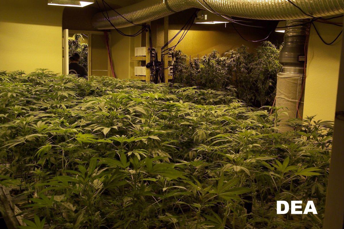 Fiscalía de Colorado acusa al mayor cártel de marihuana del estado