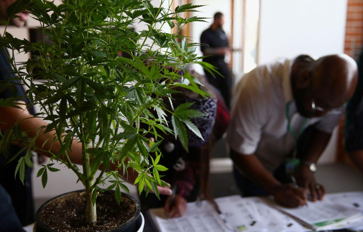 Más de 500 dispensarios de marihuana operan en Los Ángeles sin autorización