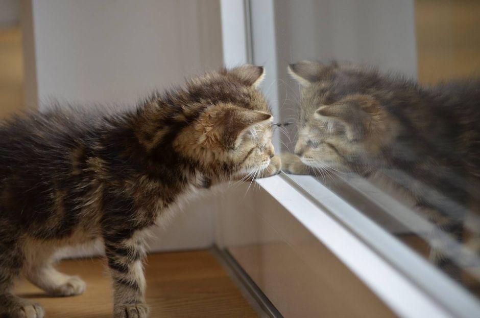 Cuatro consejos para que tu gato te deje dormir toda la noche