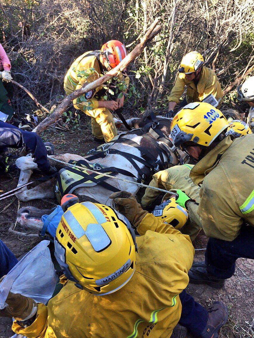 VIDEO: Rescatan en helicóptero a un caballo herido en Malibu State Creek Park