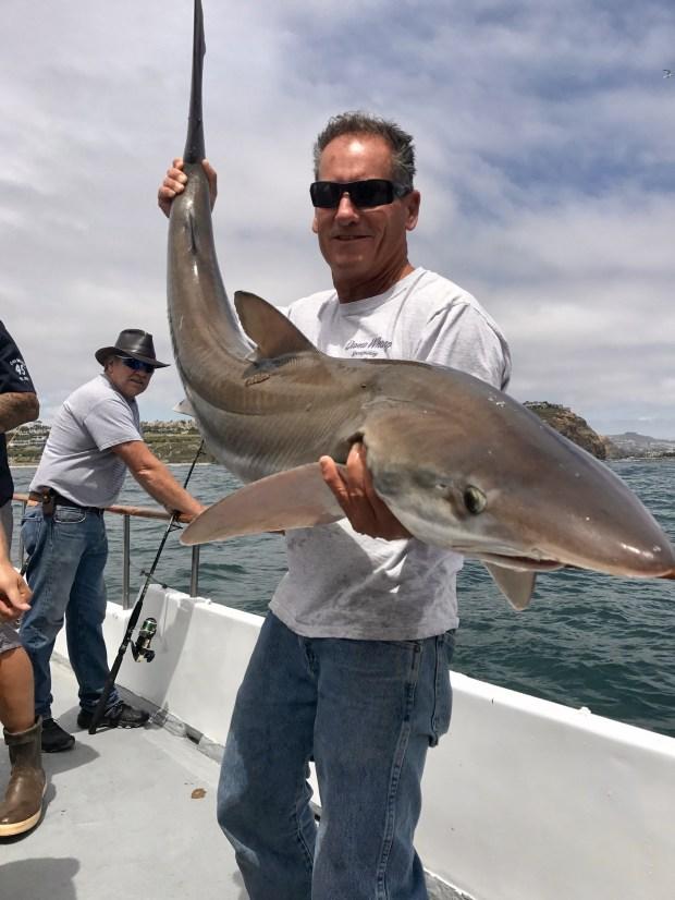 Capitán rescata a un tiburón cazón atrapado en Dana Point