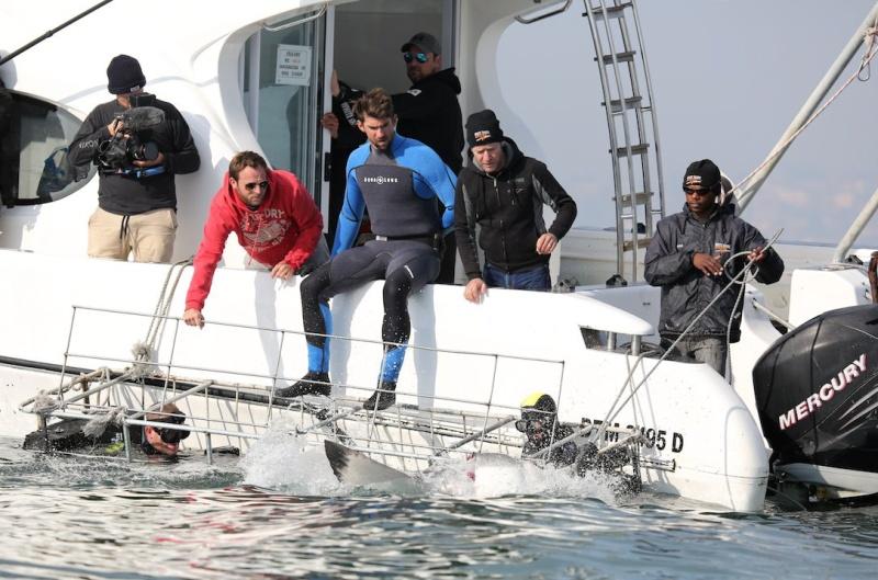 Michael Phelps se enfrentó por fin contra un tiburón blanco ¿Quién ganó?