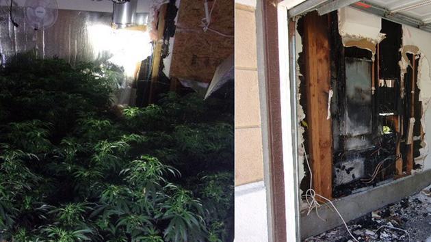 Un 'invernadero' de marihuana queda al descubierto tras un incendio en Rancho Cucamonga