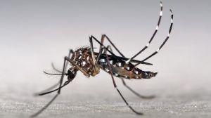 El curioso método que utilizaban nuestros antepasados para luchar contra los mosquitos en Florida