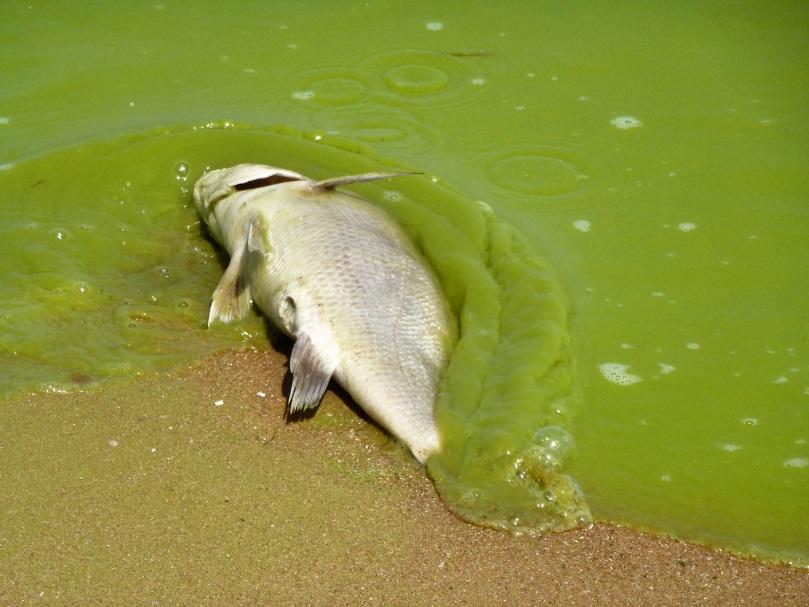 Algas tóxicas matan a dos perros en Napa; se pide precaución también entre humanos