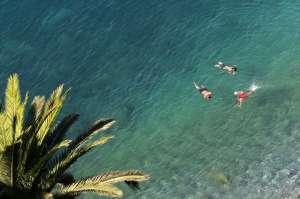 Tiburones blancos entre los bañistas de las playas del sur de California