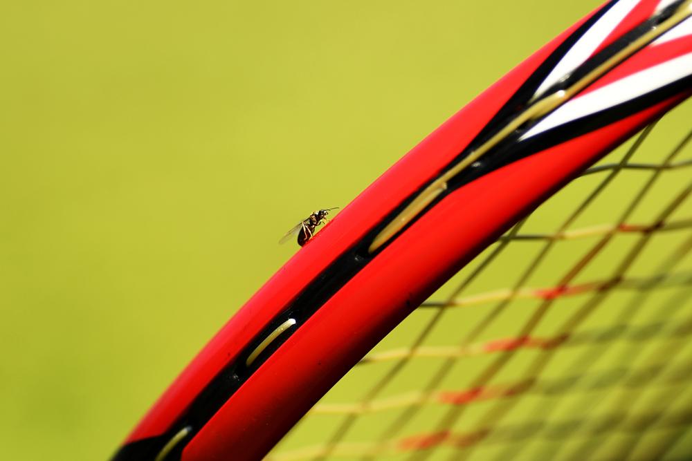 Wimbledon sufre una invasión de hormigas voladoras