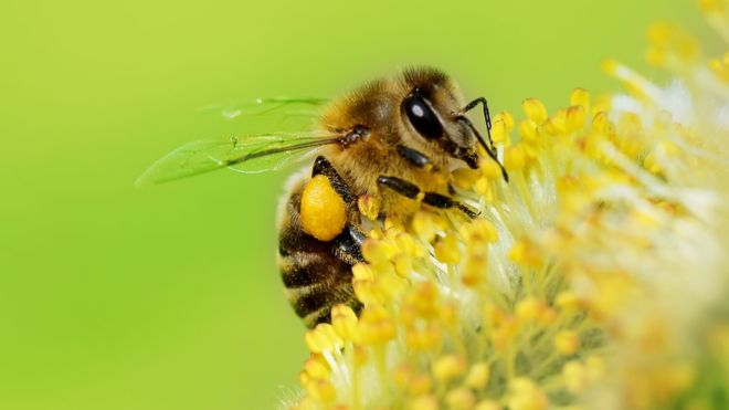 La increíble capacidad matemática que tienen las abejas