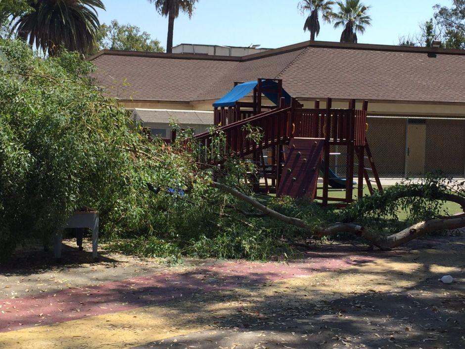 Se desploma árbol en Pasadena y lesiona a niña