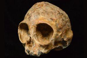 Hallan un cráneo de 13 millones de años emparentado con los humanos y todos los grandes simios vivientes