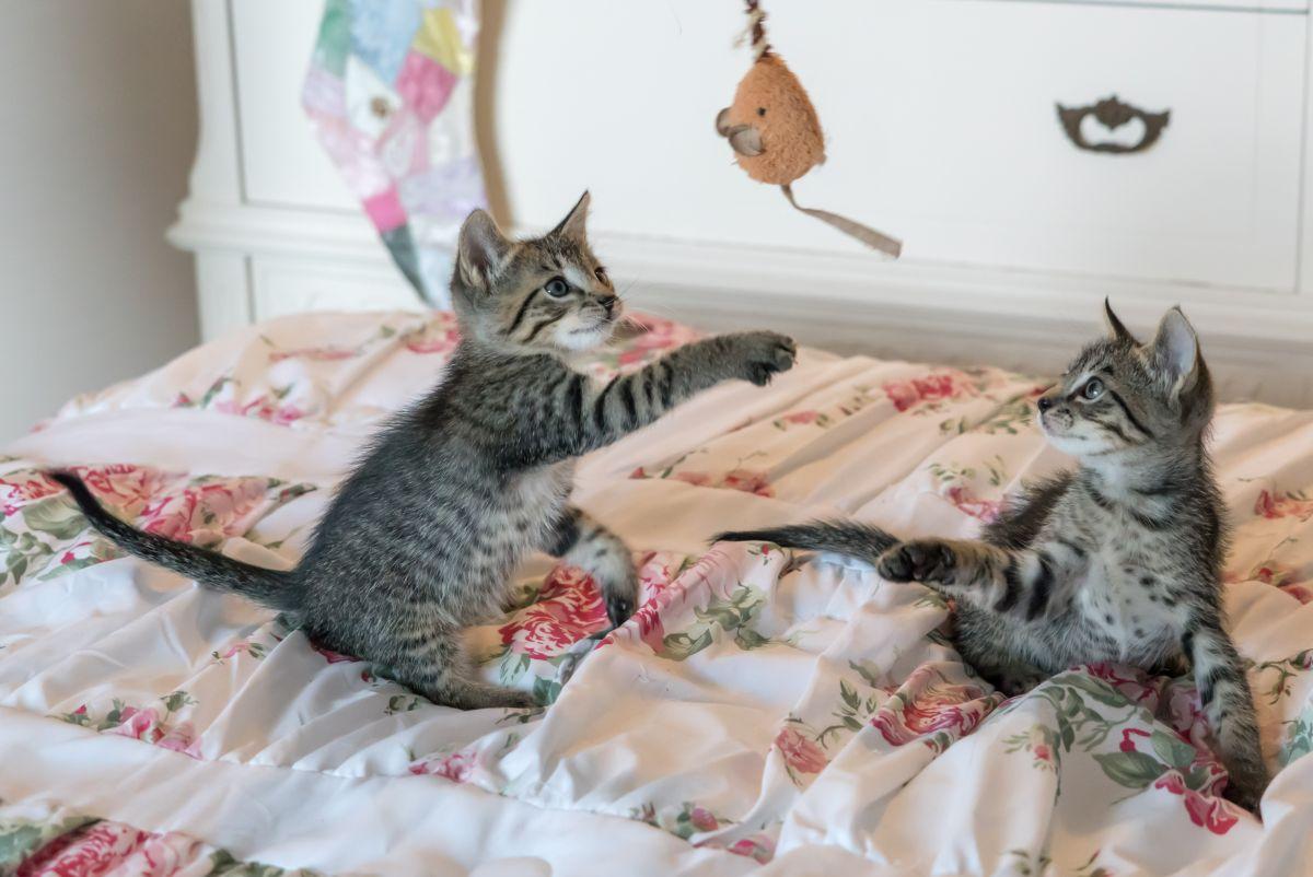 Los cuatro mejores juguetes para gato