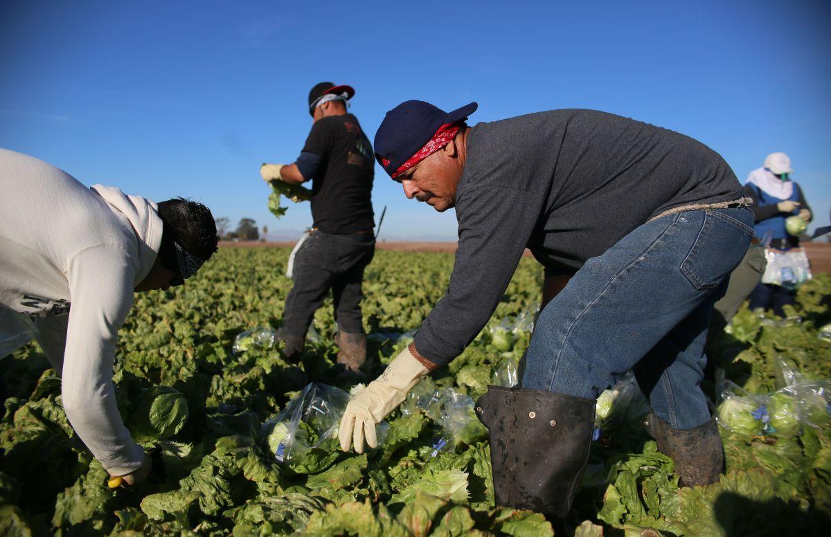 Presentan proyecto de ley que legalizaría a los trabajadores campesinos