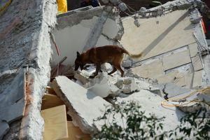 Los 4 olores que captan los perros de rescate tras un sismo como el de México
