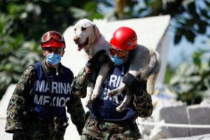 Salvar a 'tu mejor amigo': CDMX se moviliza por las mascotas afectadas tras el seísmo