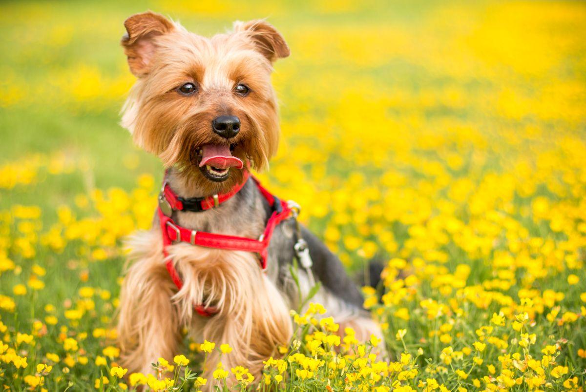 Los encargados de mascotas deben asegurarse de cumplir con algunas visitas al veterinario al año.