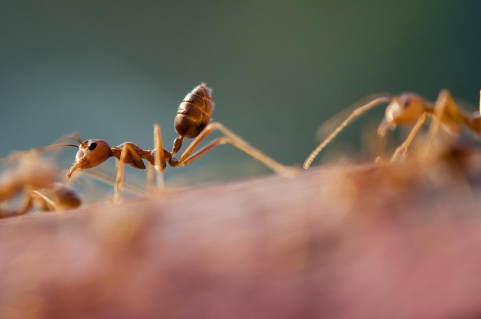 Cómo evitar que las hormigas invadan tu hogar en esta temporada de calor