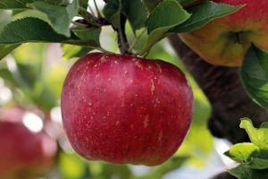 ¿Sabes lavar las manzanas de manera correcta?