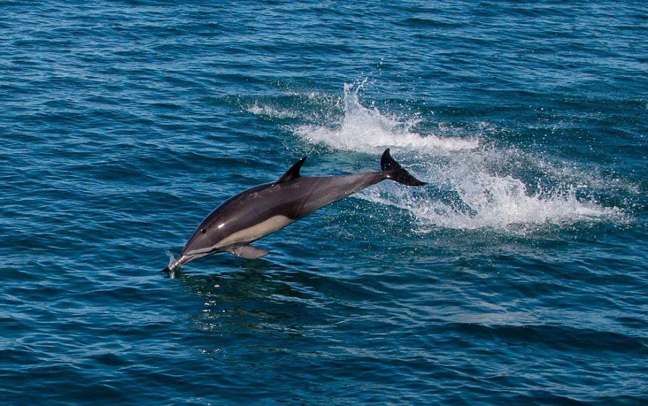 VIDEO: Captan a cientos de delfines en costas de Oaxaca