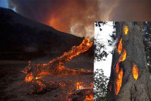 El increíble video de un árbol quemándose por dentro asemeja un portal del infierno