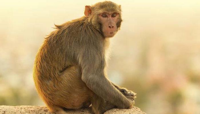 Te sorprenderá ver lo que hizo este mono