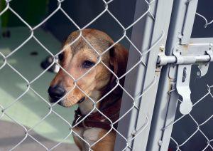 Abusadores de animales podrían ser sometidos a evaluaciones mentales