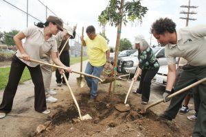 #BuenosDíasLA: Plante un árbol en Lincoln Park