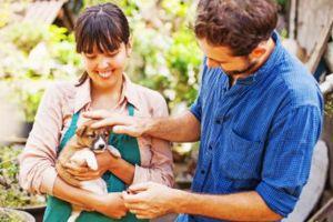 Albergues de animales siguen celebrando Thanksgiving con adopción gratis