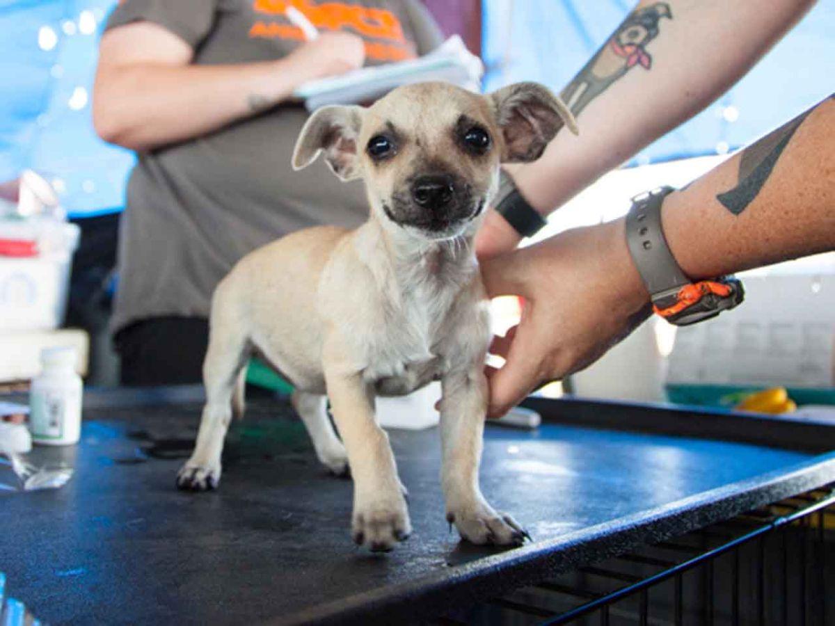 Esterilización de perros y gatos en Los Ángeles sin costo alguno
