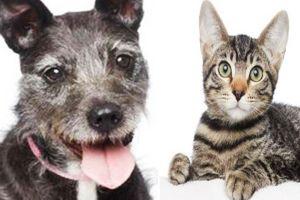 Gran promoción de Black Friday para adoptar mascotas