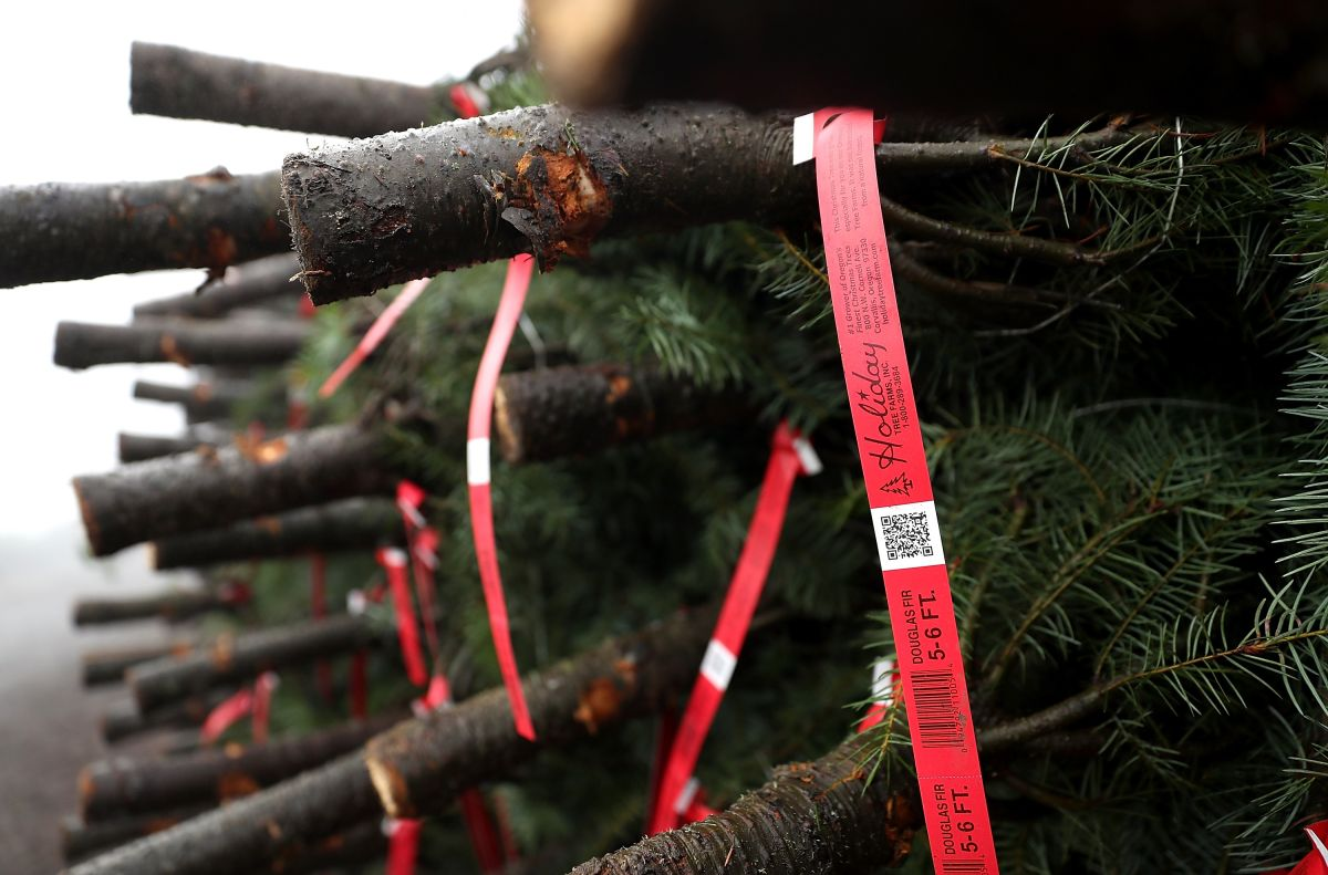 La Asociación Estadounidense del Árbol de Navidad (ACTA) estima que se venden 25-30 millones de árboles cada año.