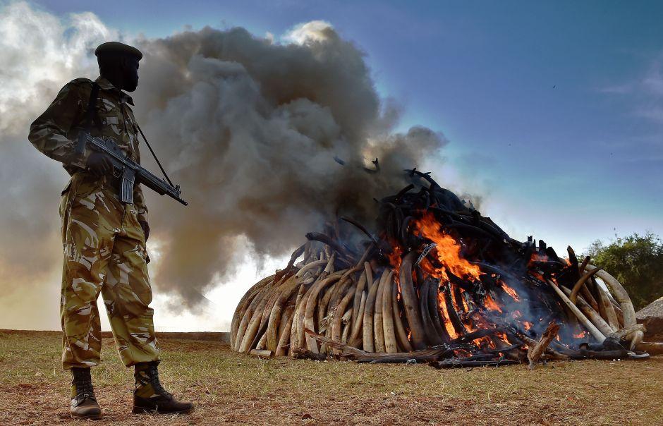 Trump deja entrever que apoyará prohibición de importar trofeos de elefantes