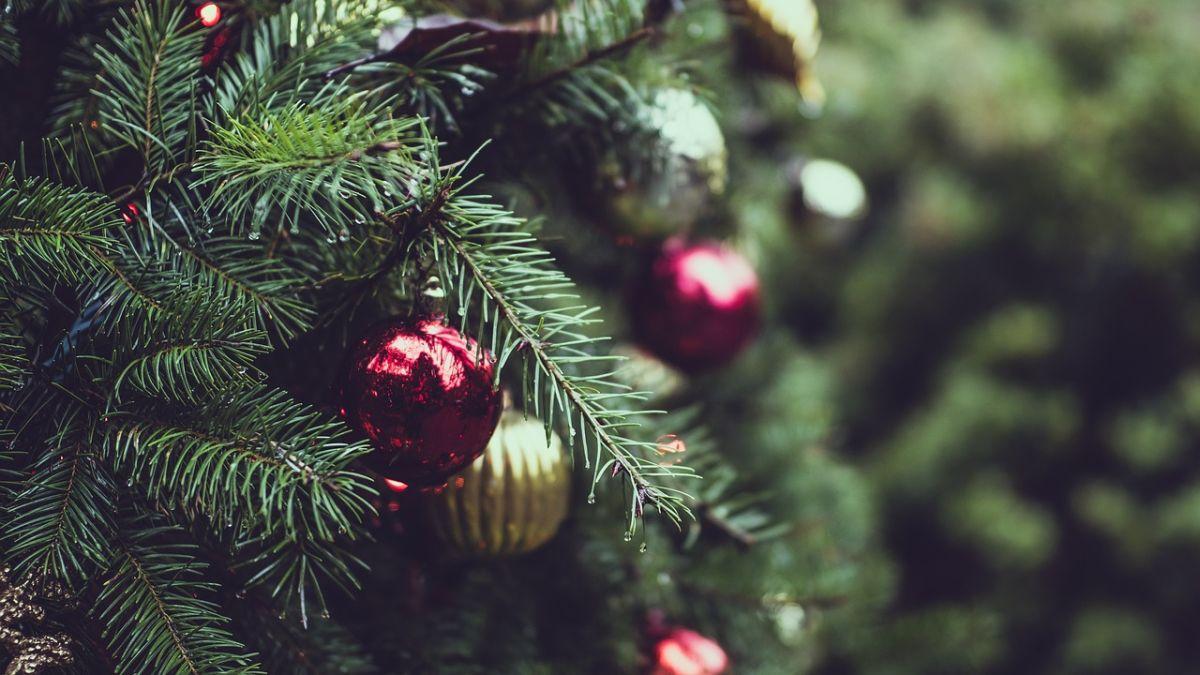 5 consejos para evitar incendios de los árboles de Navidad