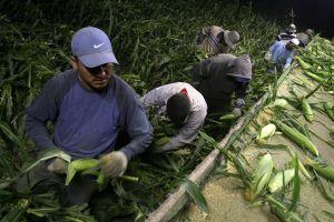 Agua contaminada con arsénico amenaza a miles de trabajadores agrícolas en Valle de Coachella