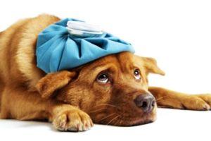 Alerta en el Sur de California por virus peligroso para mascotas