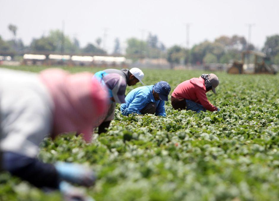 El efecto que sentirá EEUU por las redadas de ICE en contra de trabajadores indocumentados