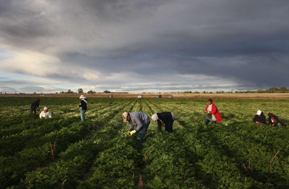 Campesinos latinos de California no tienen acceso a agua potable