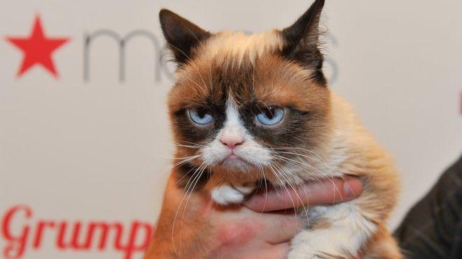 Cómo Grumpy Cat ganó demanda de $700,000 por derechos de autor