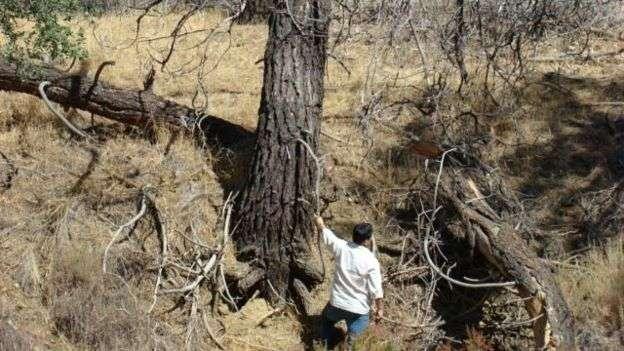 El avión se estrelló en el cañón Los Gatos, en el centro del estado de California, mientras volaba hacia la frontera con México.