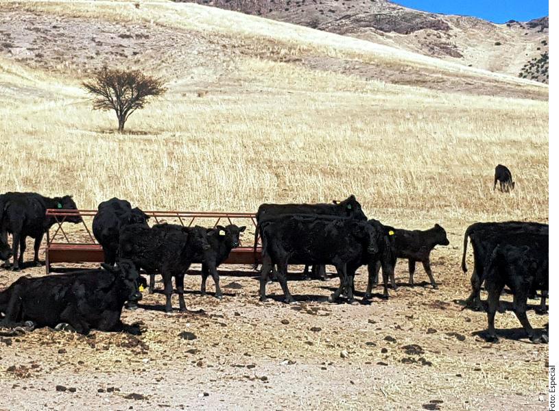 Los ranchos de exgobernador de Chihuahua son valuados en más de $5 millones
