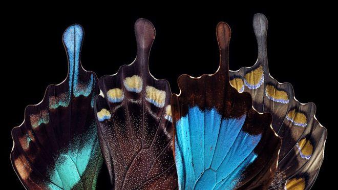 Teslagram, el método inspirado en las alas de mariposa para la seguridad de las tarjetas bancarias