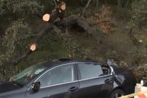 Mujer herida cuando un gran árbol cae sobre ella en Glendale